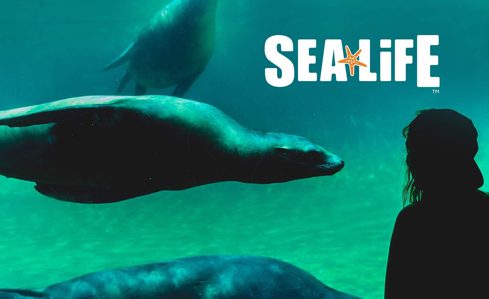 sealife-graphic-design-artwork2